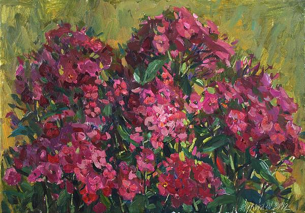 Crimson Phloxes Print by Juliya Zhukova