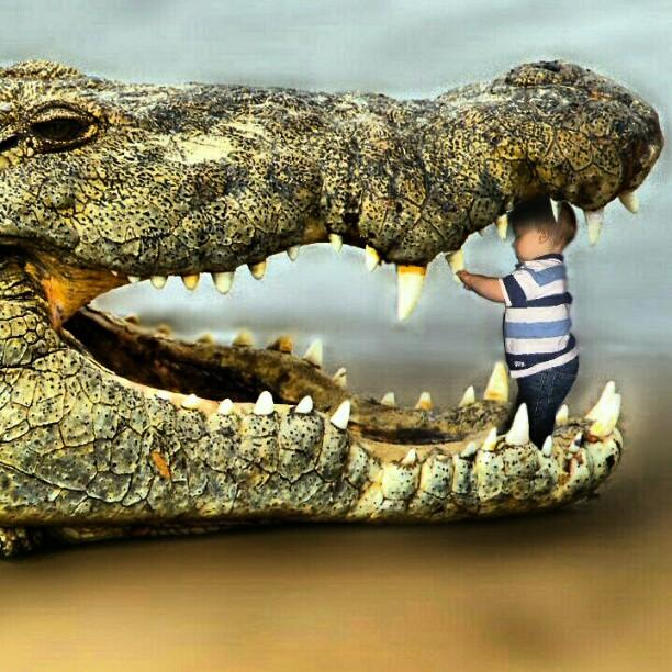 crocodile teeth how to fix