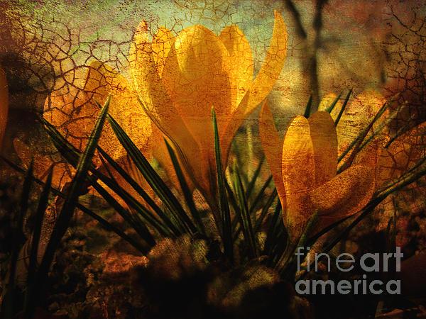 Crocus In Spring Bloom Print by Ann Powell