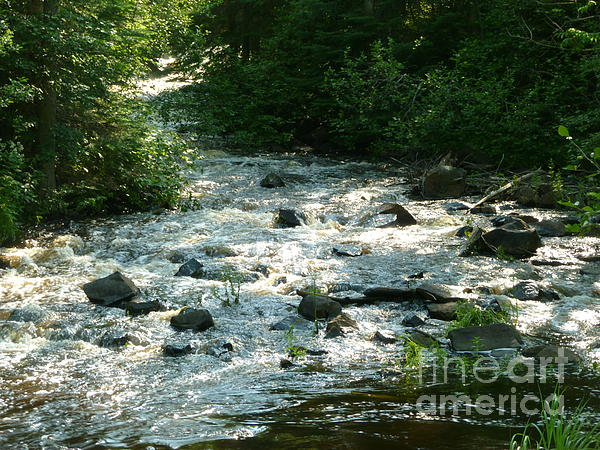 Crooked Creek Print by Sue Wild Rose