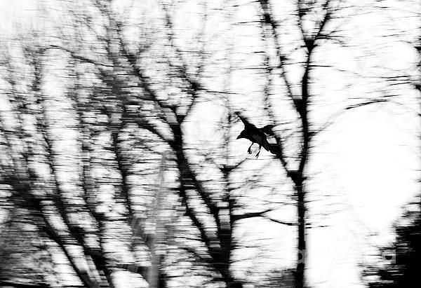 Crow Blur Print by Dean Harte