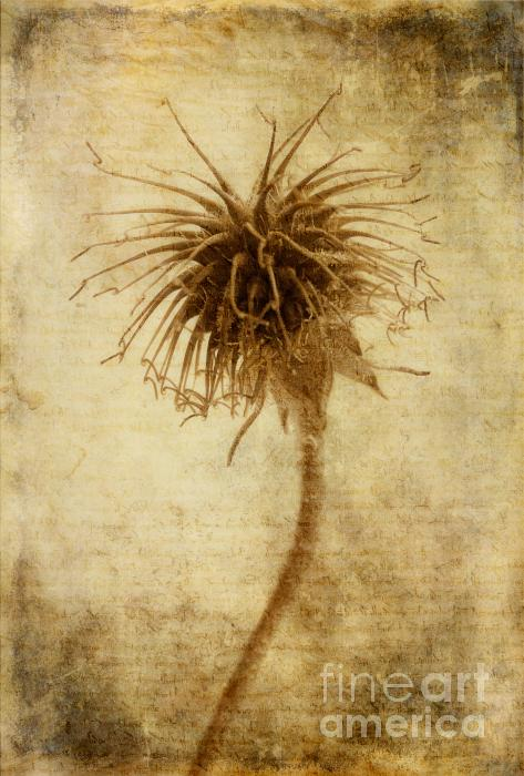 Crown Of Thorns Print by John Edwards