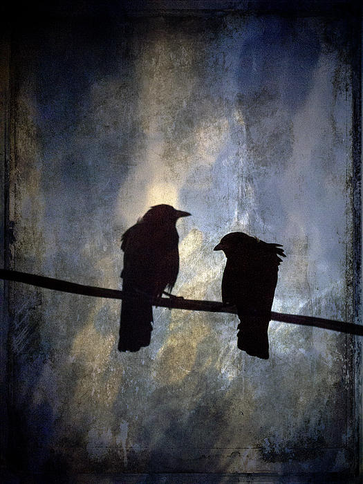 Crows And Sky Print by Carol Leigh