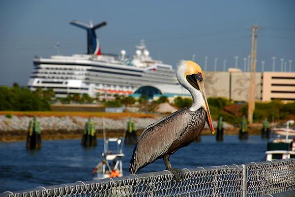 Cruising Pelican Print by Susanne Van Hulst
