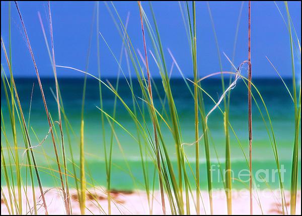 Judi Bagwell - Crystal Beach