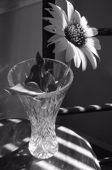 Lynnette Johns - Crystal Sunflower