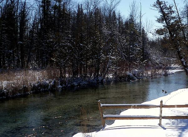 Cut River In Winter With Ducks Print by Desiree Paquette