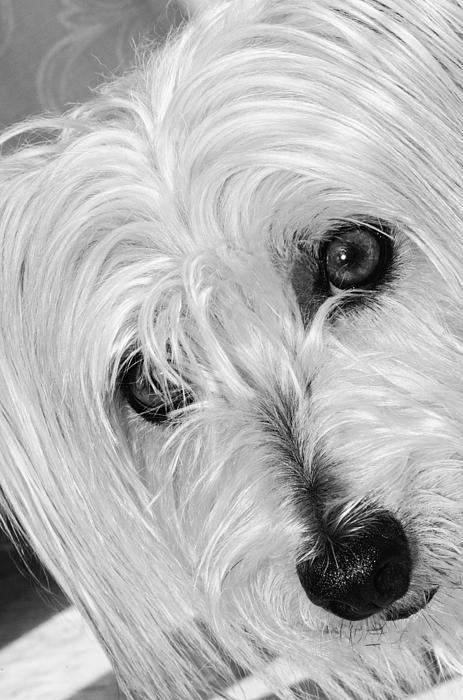 Cute Dog Print by Imagevixen Photography