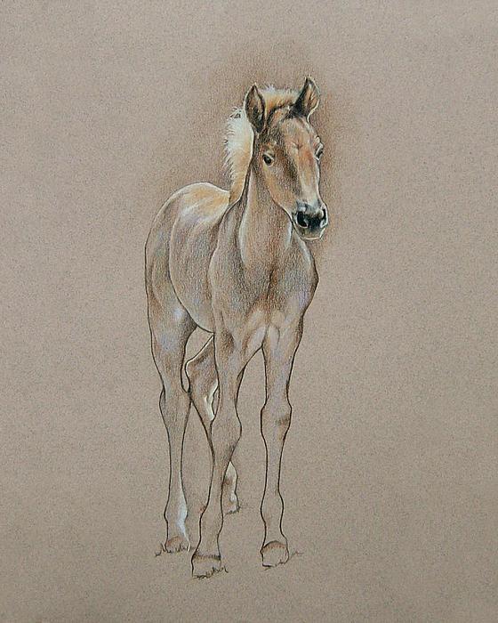 Cyndee's Foal Print by Cindy Davis