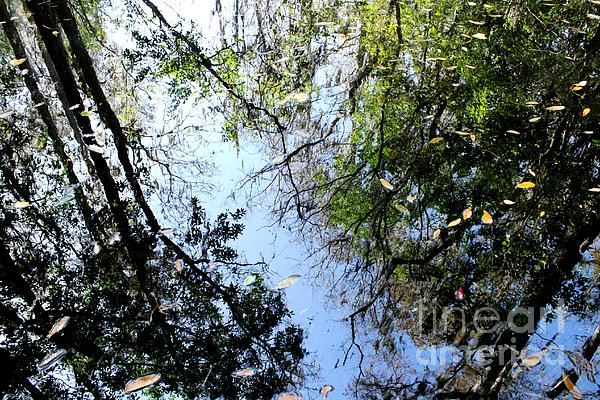 Cypress Reflections Print by Theresa Willingham