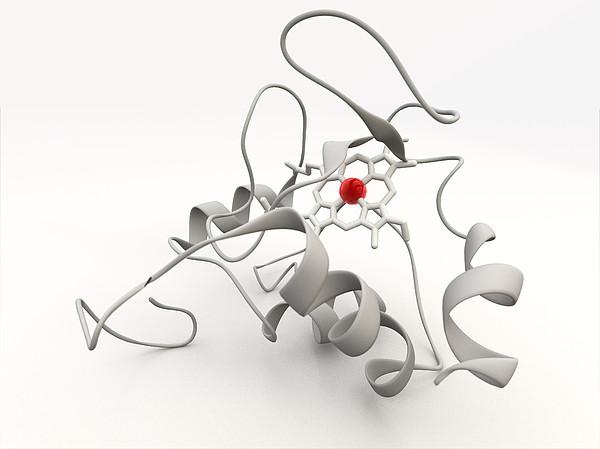 Cytochrome C Print by Phantatomix