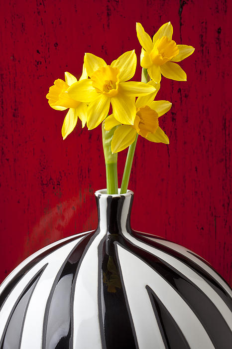 Daffodils Print by Garry Gay