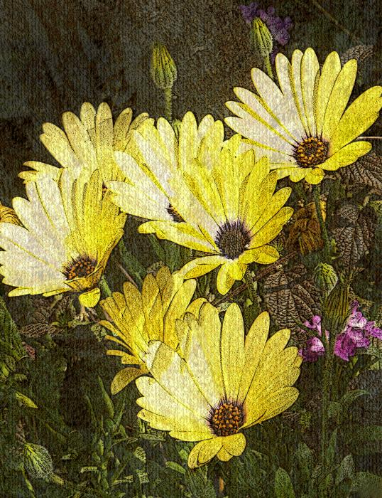 Daisy Daisy Print by Tom Romeo