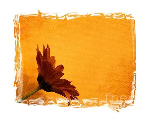Daisy In The Yellow Corner Print by Marsha Heiken