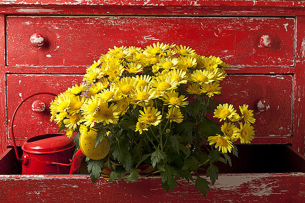 Daisy Plant In Drawers Print by Garry Gay