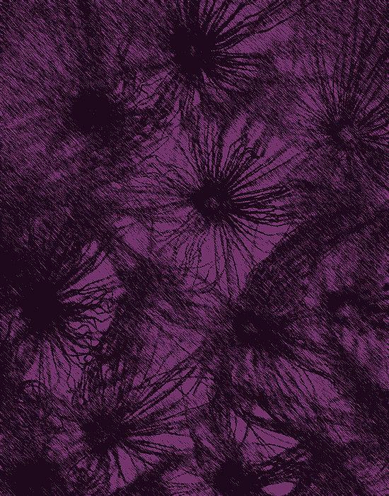 Dandelion Abstract Print by Ernie Echols