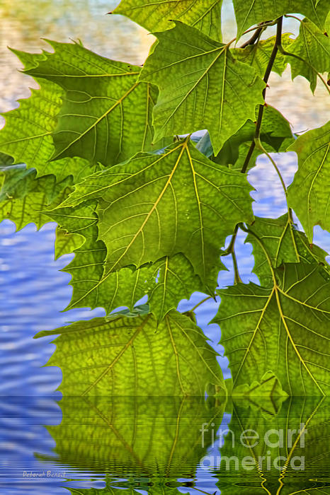 Dangling Leaves Print by Deborah Benoit