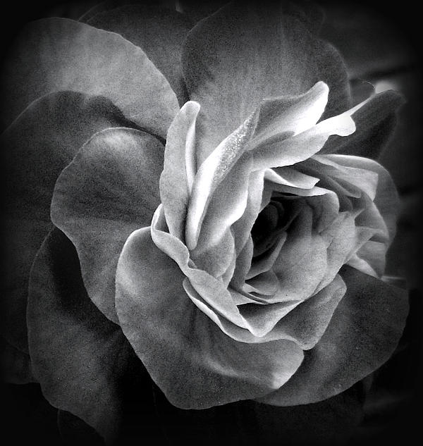 Lorainek Photographs - Dark Beauty