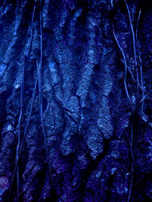 Allen n Lehman - Dark Nights Walk