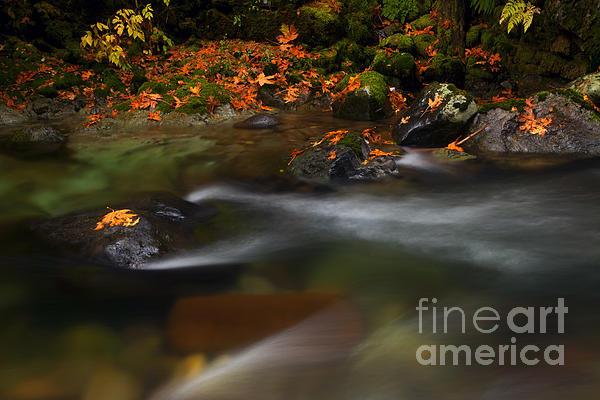 Dark Water Autumn Print by Mike  Dawson