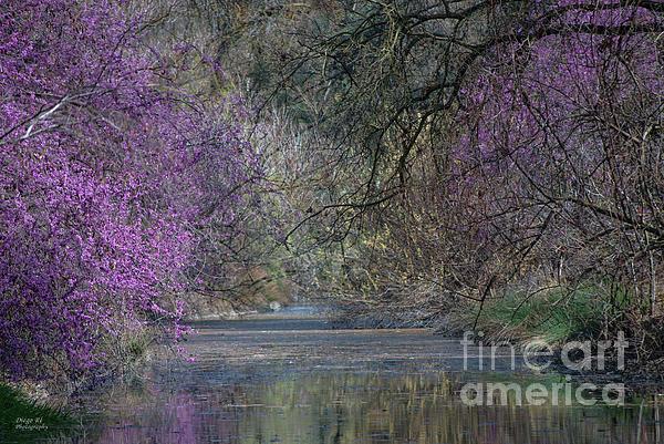 Davis Arboretum Creek Print by Agrofilms Photography