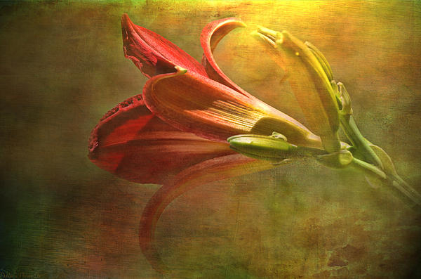 Daylily Photoart With Texture II Print by Debbie Portwood
