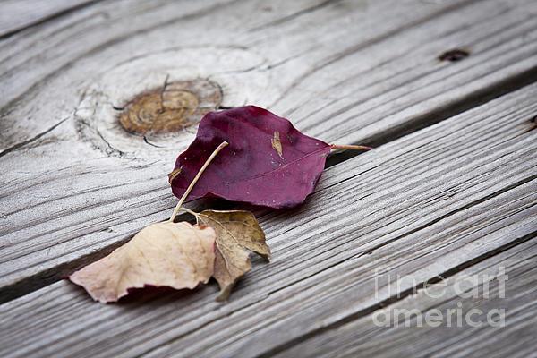 Olivier Steiner - Dead Leaves
