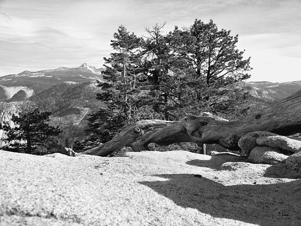 Thomas Leon - Dead Tree on glacier Point