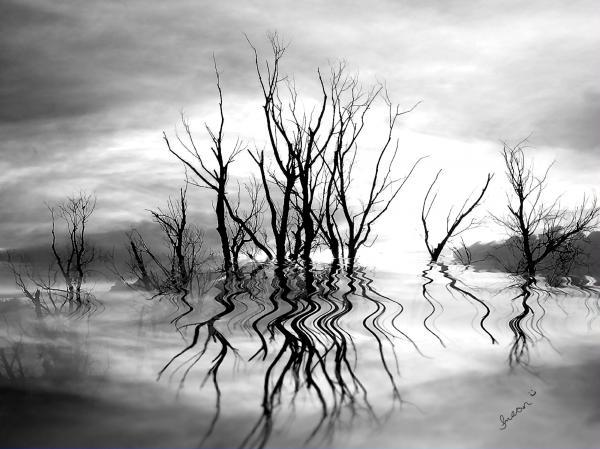 dead-trees-bw-susan-kinney.jpg