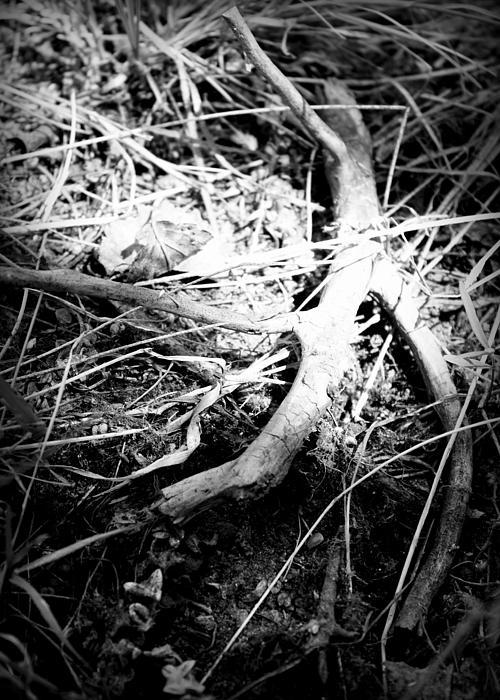 Douglas Wilks - Dead Wood Two