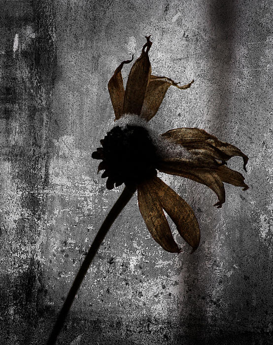 Larysa Luciw - Dead Yellow