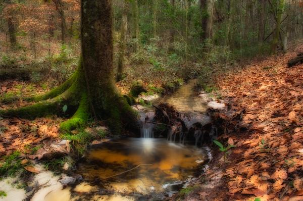 Deep Forest Creek Print by Rich Leighton