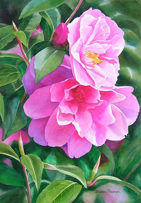 Deep Pink Camellias Painting  - Deep Pink Camellias Fine Art Print