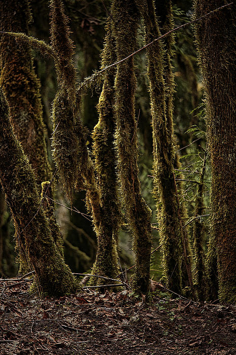 Deep Woods Print by Bonnie Bruno