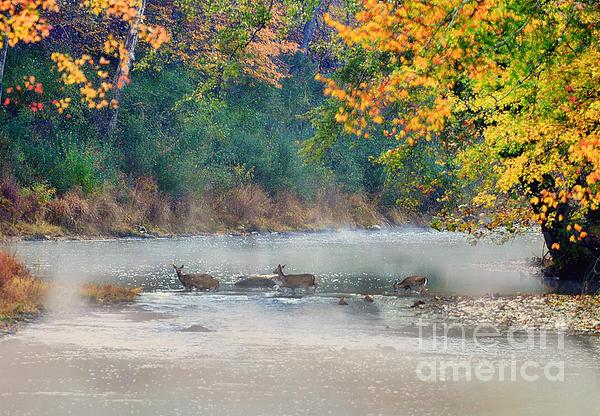 Deer Crossing River Print by Dan Friend