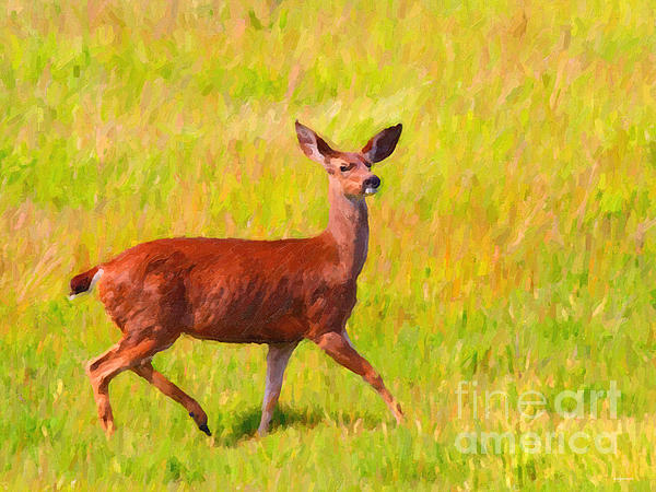 Deer In The Meadow Print by Wingsdomain Art and Photography