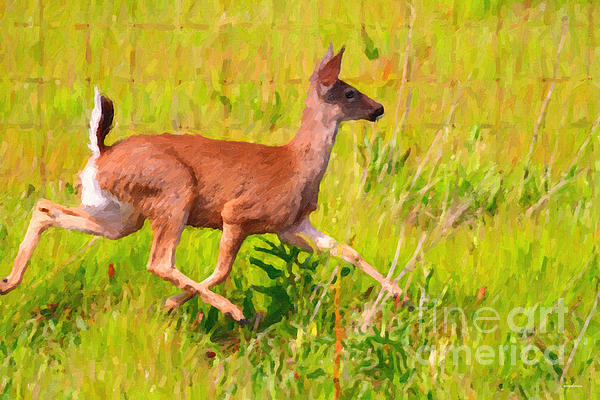 Deer Prancing In The Field Print by Wingsdomain Art and Photography