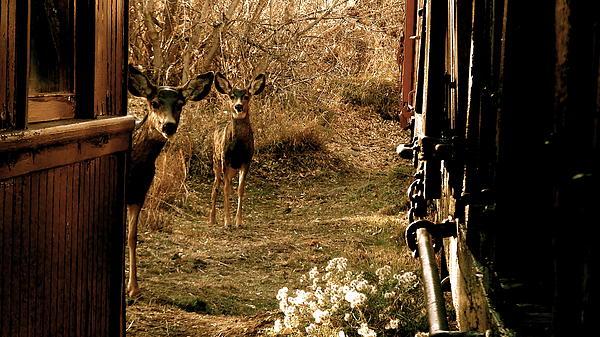 Deer Train Yard In Golden Print by Travis Burns