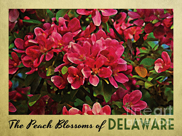 Delaware Peach Blossoms Print by Flo Karp