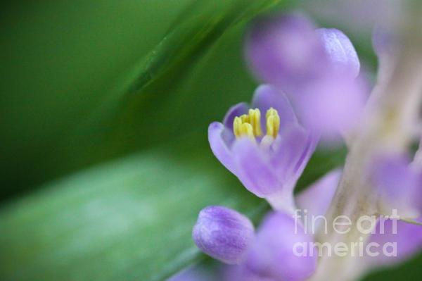 Delicate Purple Flower Print by Ryan Kelly