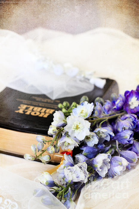 Delphiniums And Bible Print by Stephanie Frey
