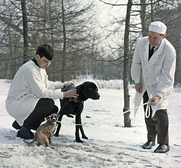 Demikhov's Laboratory Dogs, 1967 Print by Ria Novosti