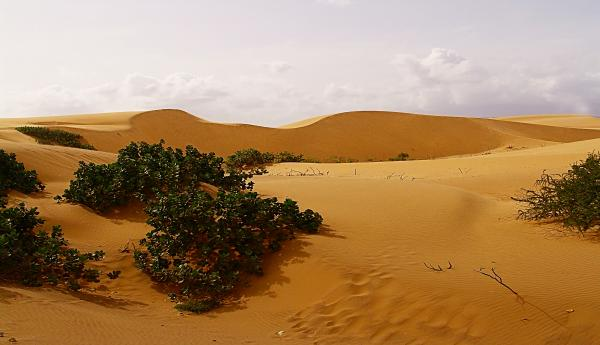 http://images.fineartamerica.com/images-medium/desert-in-venezuela-riccardo-zullian.jpg