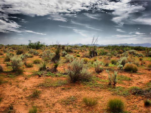 Desert Of New Mexico Print by Thomas  MacPherson Jr