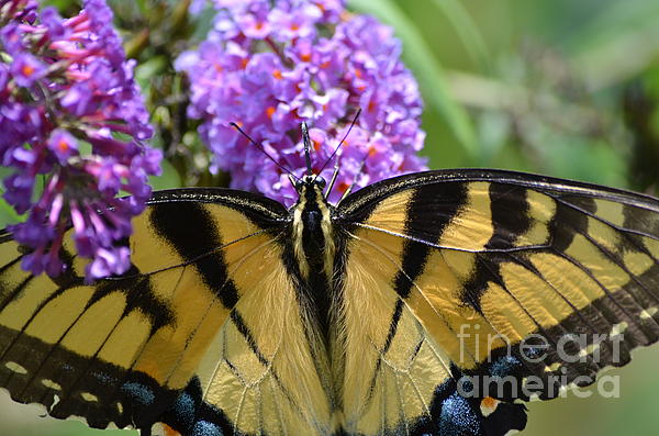 Detailed Wings Print by Kathy Gibbons