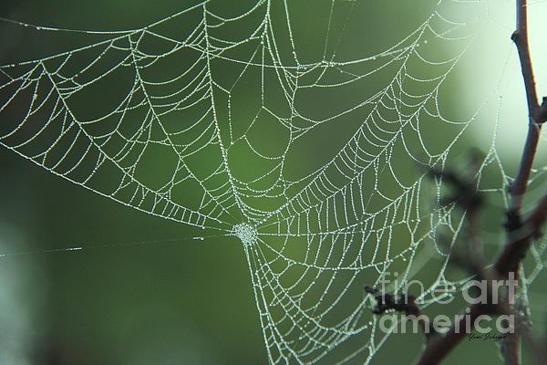Yumi Johnson - Dews on the Spider web