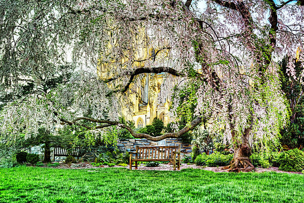 Digital Liquid -  Cherry Blossoms At The Washington National Cathedral Print by Metro DC Photography
