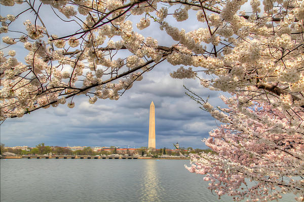 Digital Liquid - Cherry Blossoms Washington Dc 4 Print by Metro DC Photography