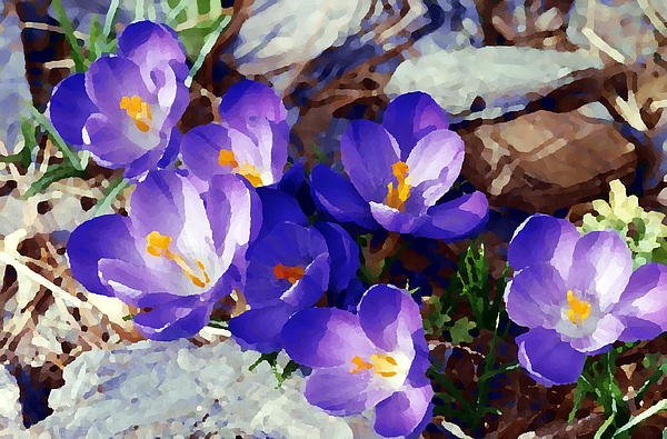 Digitally Painted Crocus Photograph  - Digitally Painted Crocus Fine Art Print