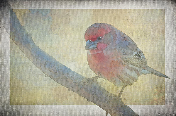 Debbie Portwood - Digitally painted Finch with texture II